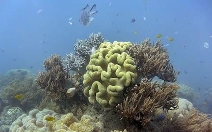 Unesco: l'Australia protegga meglio la Grande barriera corallina