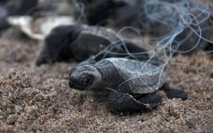 Pesca, reti fantasma killer: uccidono 100mila animali marini all'anno
