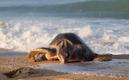 Giornata tartarughe marine, 50mila all'anno vittime di reti pesca