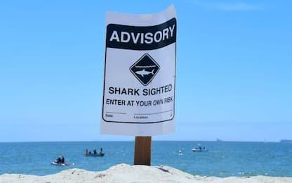 Spagna, panico in spiaggia: catturato squalo azzurro a Maiorca