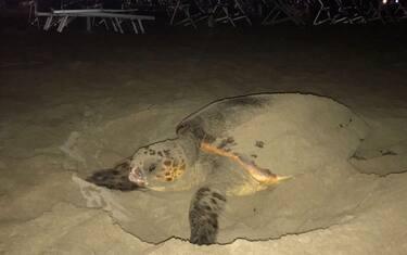 tartaruga_spiaggia_1