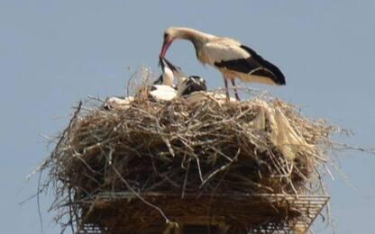 Sala Consilina, nido sul traliccio