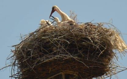 Gli uccelli del Cretaceo nati pronti per correre: lo dicono i fossili