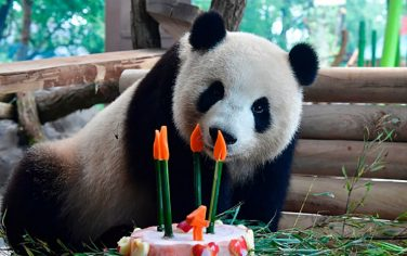 GettyImages-MengMeng_Compleanno6