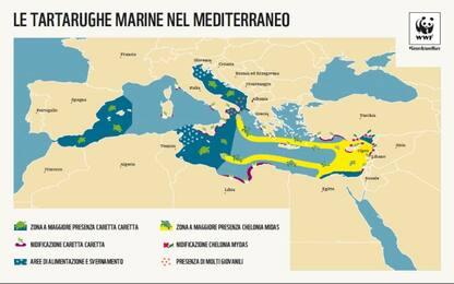 Dove vivono le specie simbolo del Mediterraneo? Le mappe del Wwf