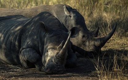 Giornata mondiale della biodiversità, Ispra: necessario tutelarla