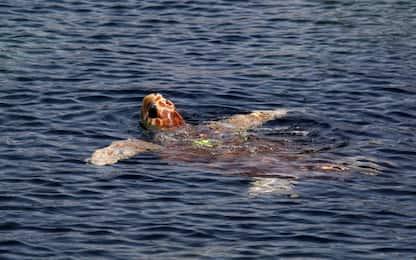 Messico, 351 tartarughe marine trovate morte sulla spiaggia