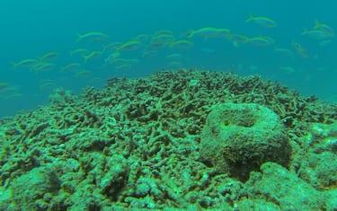 Maldive1-BiosphereExpeditions