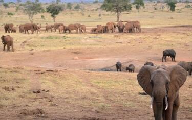 Elefanti-Africa-GettyImages