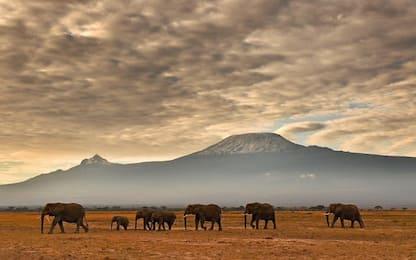 Sempre meno Elefanti. Il bando d'avorio in Cina può cambiare il trend