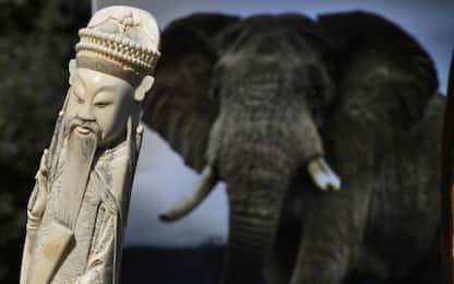 È la Giornata dell'elefante. FOTO