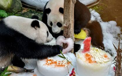 Compleanno panda giganti