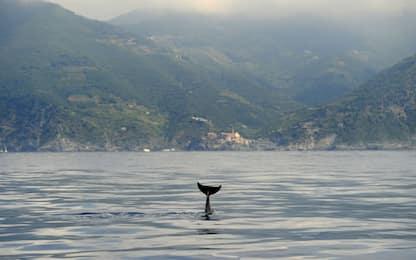 Sardegna, maggiore protezione per il Santuario dei cetacei