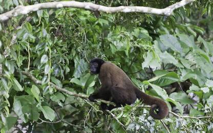 Amazzonia, scoperte 381 nuove specie tra il 2014 e il 2015