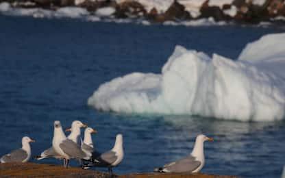 Il Canada per #CleanSeas, lotta alla plastica negli oceani