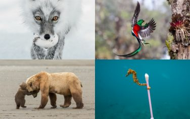 Wildlife_Photographer_of_the_Year_Collage