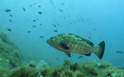 Scoperti i pesci con super vista che distinguono i colori negli abissi