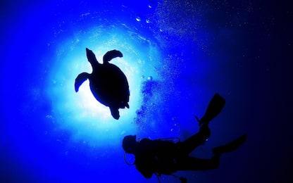 Marche, ritrovate le carcasse di due tartarughe Caretta caretta