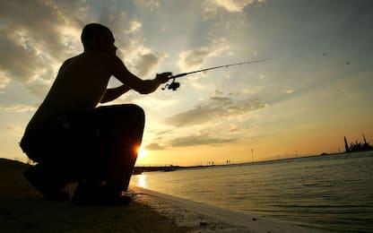 Molfetta, pescato un esemplare del pericoloso pesce palla maculato