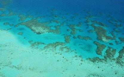 Stress da caldo, morto un terzo dei coralli della barriera australiana