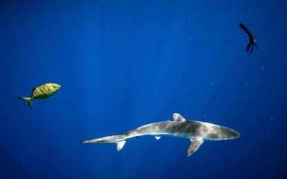 Oceano, i pesci nuotano migliaia di km per trovare acque più fredde