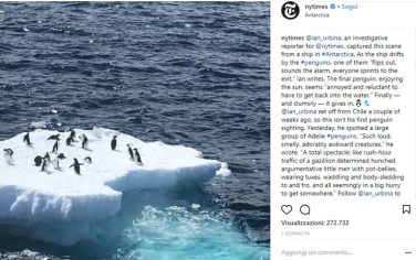 pinguini-newyorktimes