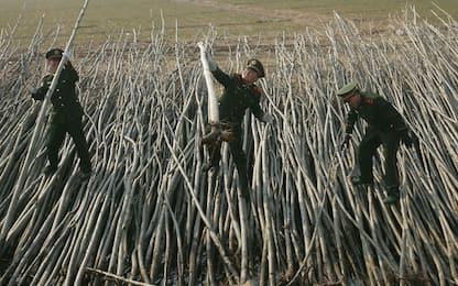 Cina, 60mila soldati per piantare alberi