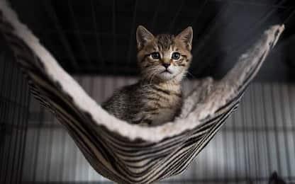Giornata nazionale del gatto 2020: perché si celebra il 17 febbraio?