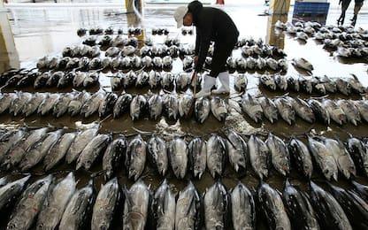 Acitrezza, mercato ittico chiuso dopo l'ispezione del Nas