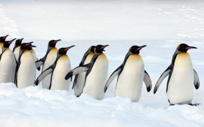 """Pinguini reali, elevate quantità di """"gas esilarante"""" nelle loro feci"""