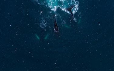 Pesca-Greenpeace
