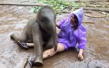 Le coccole del cucciolo di elefante sorprendono la turista: VIDEO