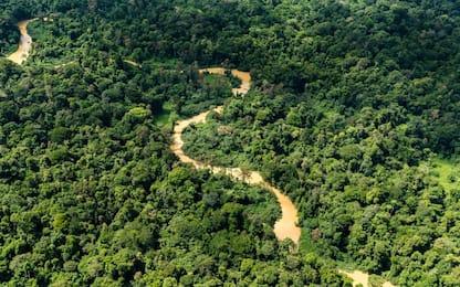 La siccità in Amazzonia mette a rischio l'ecosistema globale
