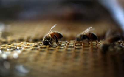 Miele, tutte le proprietà e i benefici per la salute