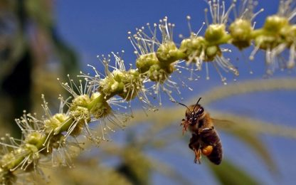 Perché le api stanno scomparendo, il ruolo dei pesticidi