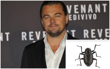 collage_dicaprio_scarabeo