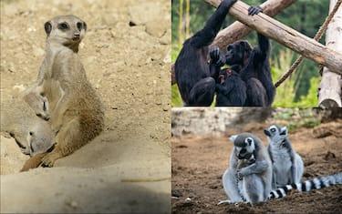 Parco_Animali