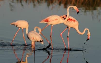 Giornata mondiale della biodiversità, a tutela di flora e fauna