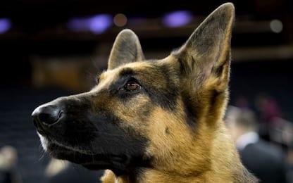 Cane dei carabinieri fiuta 650g di droga: un arresto nel Catanese