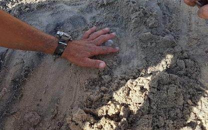 Lecce, trovato su una spiaggia un nido di tartaruga Caretta caretta