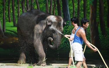 GettyImages-india_caldo_animali_zoo2