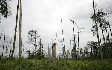 GettyImages-deforestazione