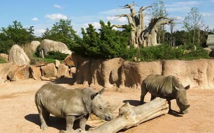 Giornata mondiale del rinoceronte: ucciso un esemplare ogni sette ore