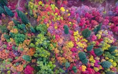 Lo spettacolo dei colori dell'autunno ripreso dal drone in Utah. VIDEO
