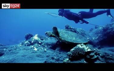 ocean_film_festival