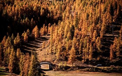 In Italia 145 mln tonnellate Co2 vengono assorbiti da boschi ogni anno