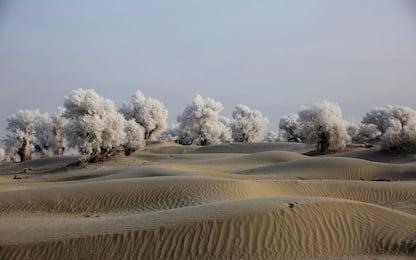 Cina, i pioppi imbiancati nel deserto del Taklamakan