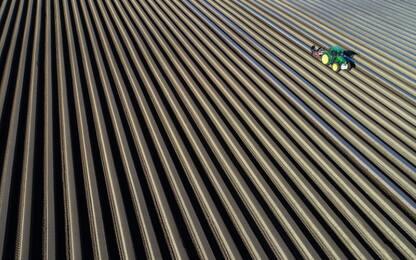 Biodiversità, allarme della Fao: a rischio futuro dei nostri alimenti
