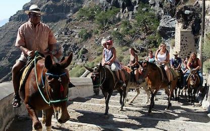 Santorini, attivisti chiedono stop ad asini che trasportano turisti