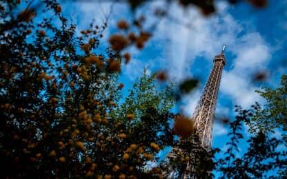 Francia, sboccia la primavera nei prati di Parigi. FOTO